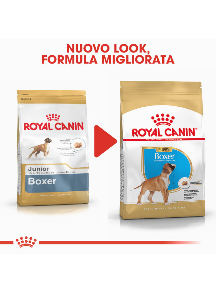 boxer-puppy-royal-canin-6