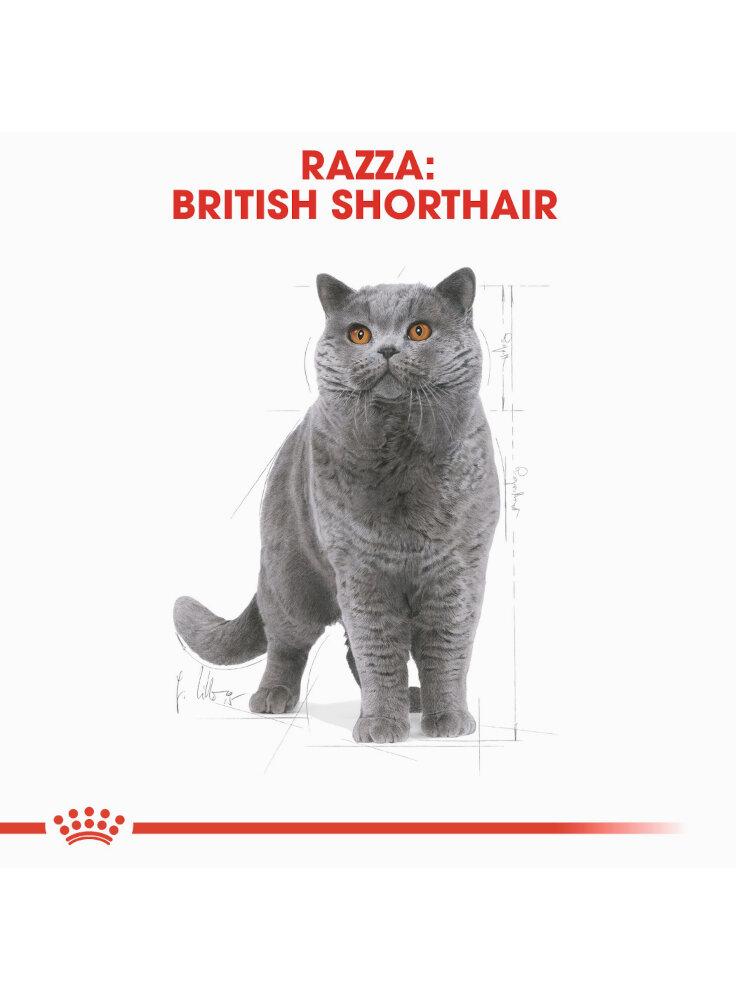 british-shorthair-royal-canin-1