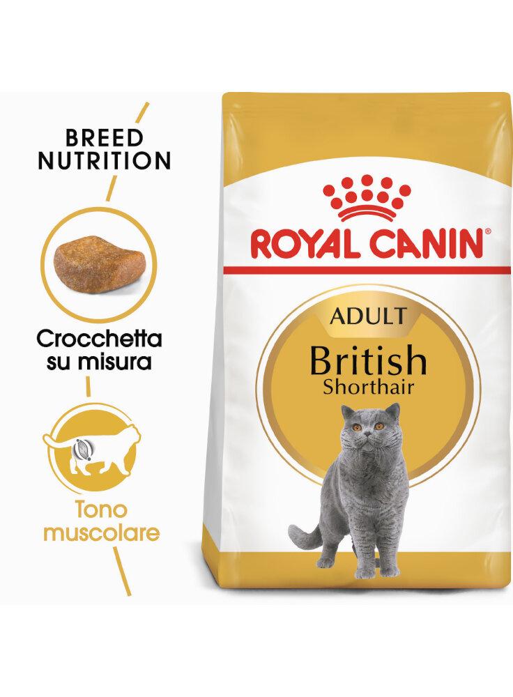 british-shorthair-royal-canin-400-gr