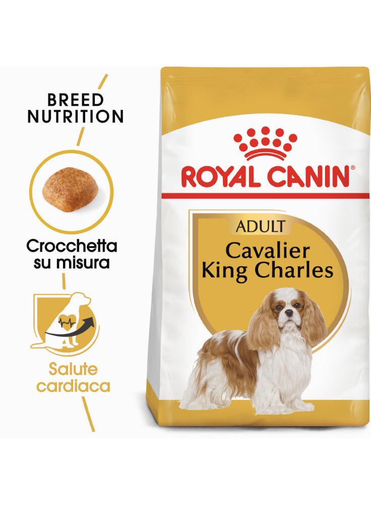 Cavalier King Charles Adult Royal Canin