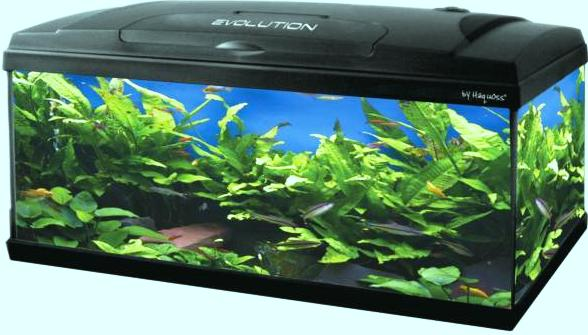 Acquario Evolution 100 haquoss lt 120 cm 100x30x54h