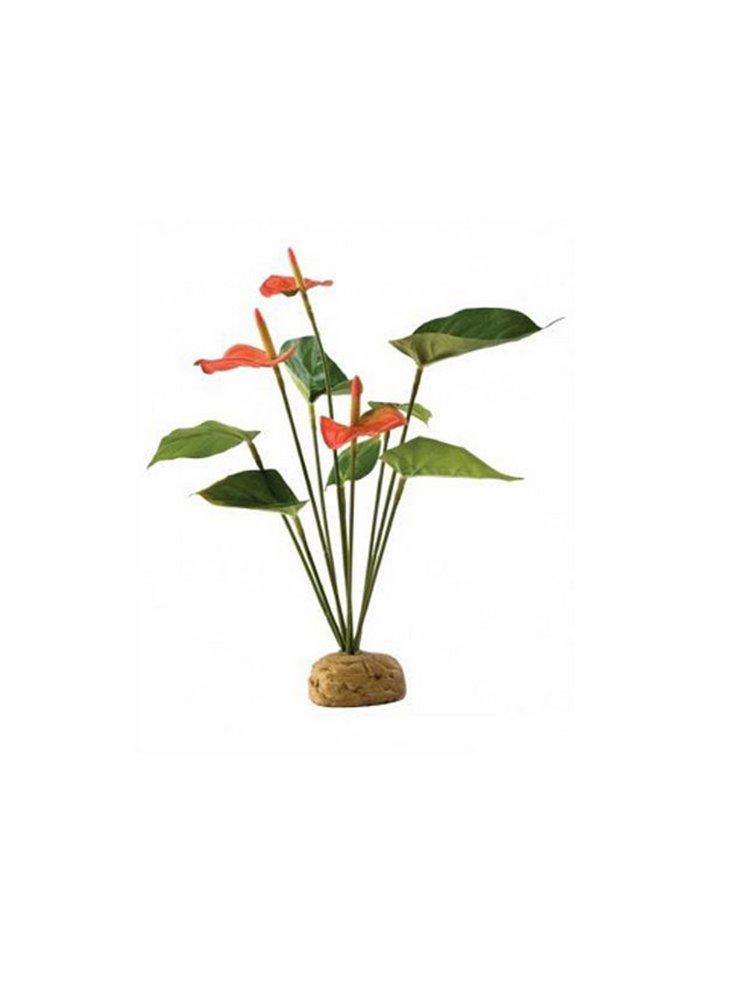 Pianta exoterra anthurium bush