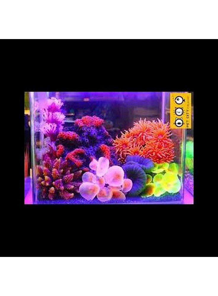 Coralli fluorescenti azoo assortimento 4pz