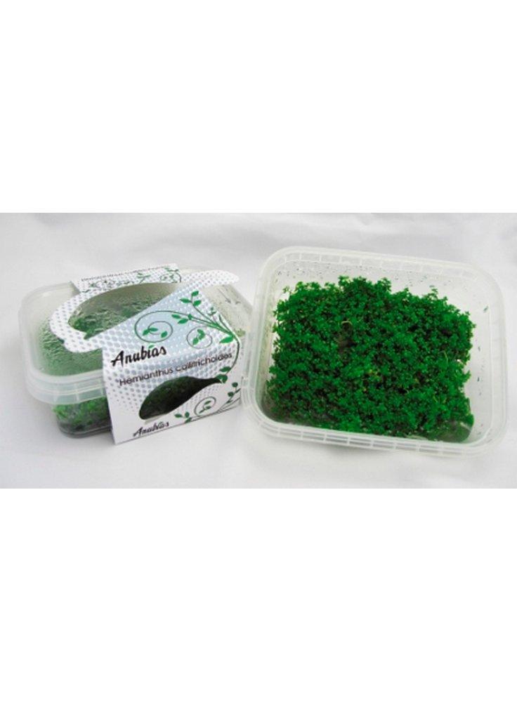 Assortimento lusso 3 piante da pratino per acquario linea CUP carpet