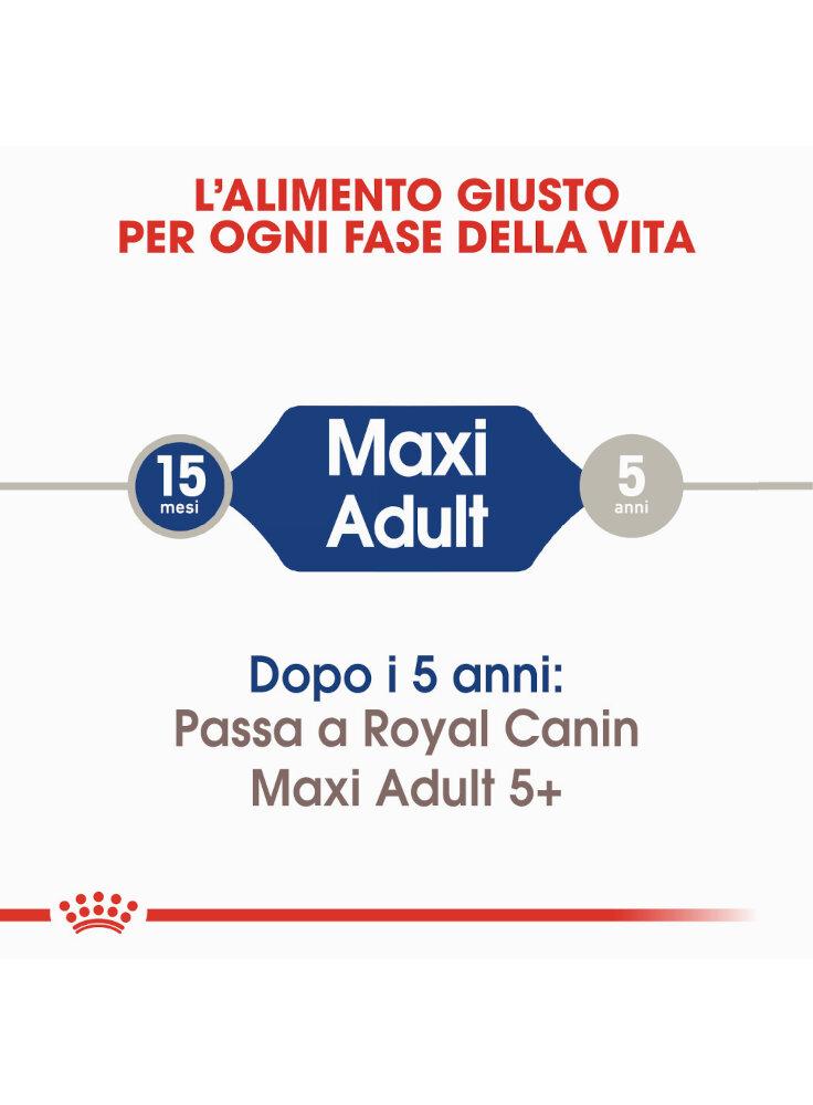 maxi-adult-cane-royal-canin-1