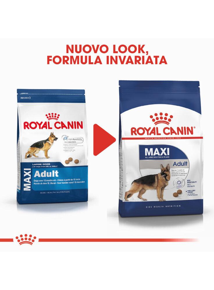 maxi-adult-cane-royal-canin-3