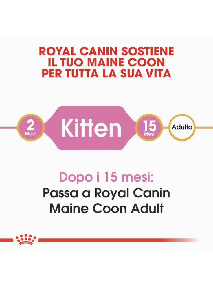 rc_fbn_kittenmainecoon_cv1_002_italy_italian__3