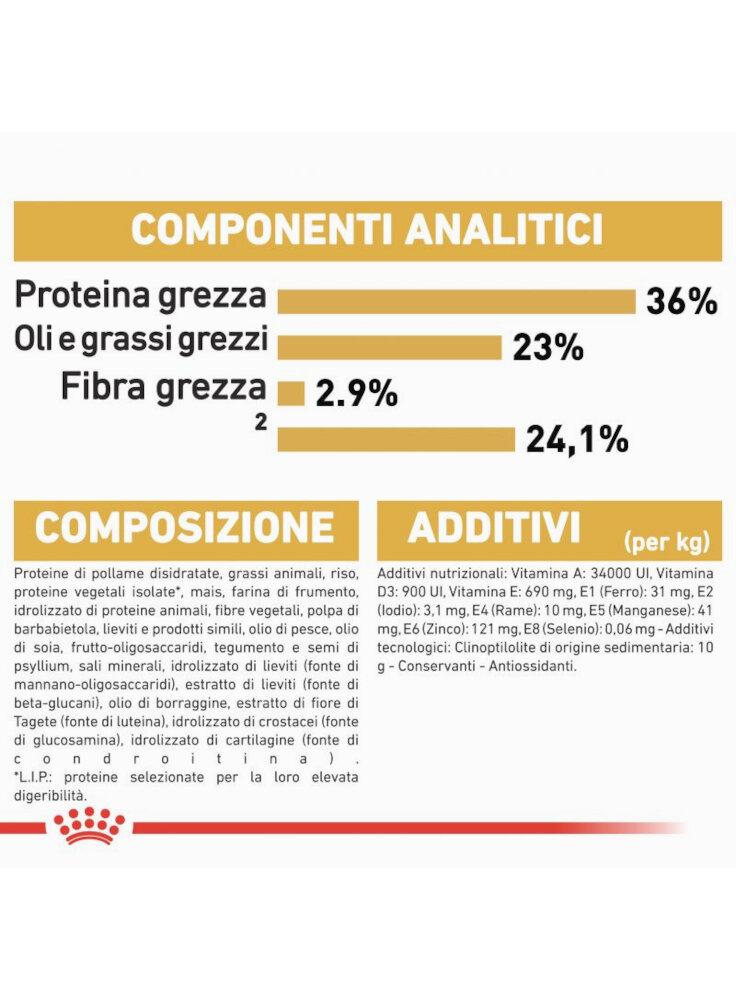 rc_fbn_kittenmainecoon_cv9_1_002_italy_italian__8