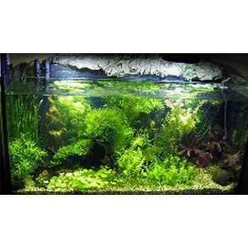 Come allestire un 39 acquario for Acquari completi offerte