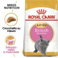 British Shorthair Kitten Royal Canin 400g