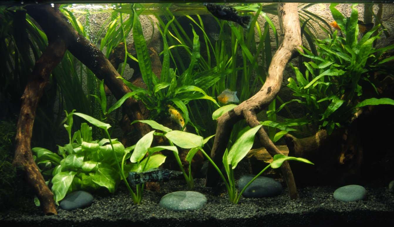Allestimento acquario askoll ambiente dolce tropicale for Fondo per acquario