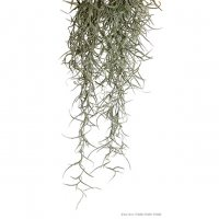Pianta exoterra plant spanish moss small