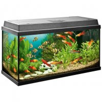 Acquario JUWEL REKORD 600 All inclusive 63 lt