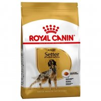 Setter Adult Royal Canin