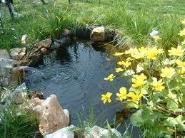 Kit laghetto lagofacile con sterilizzatore e filtro for Piante acquatiche laghetto giardino
