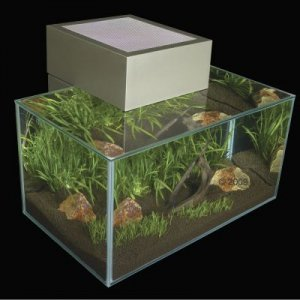 Design acquario edge askoll