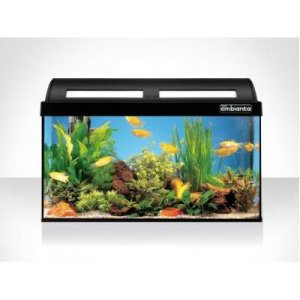 Acquario Askoll ambiente 80 advance