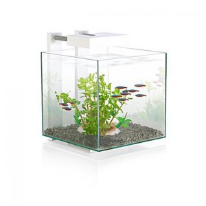 Acquario per caridine e betta nexus pure 14lt askoll for Acquario per caridine