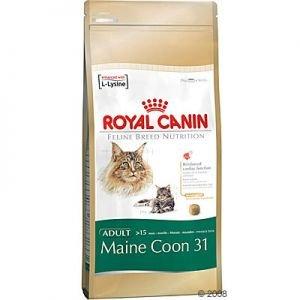 Cibo Per Gatti Main Coon Maine Coon 31 Royal Canin Royal Canin
