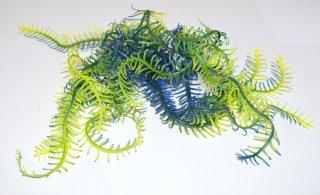 Decorazione acquario Stella di mare echinodema az27219
