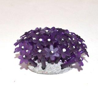 Corallo palitoa viola neon azoo az27167
