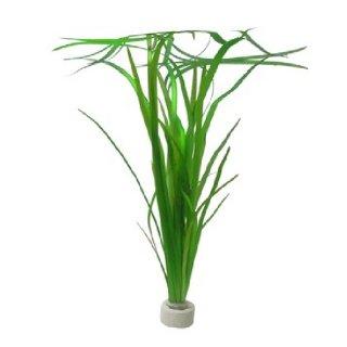 Vallisneria spiralis e nana assortimento 3 piante