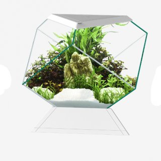 Askoll acquario nexus pure 5c betta life 5.5 Lt