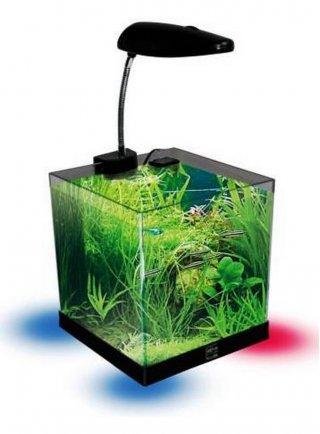 Acquario Open Cube haquoss Blu 8.0 20x20x20h cm - lt 8