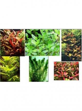 Assortimento le rapide (3 piante)