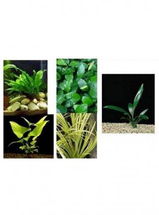 Assortimento le robuste (3 piante)