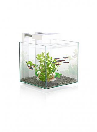 Acquario per caridine e betta nexus pure 14lt