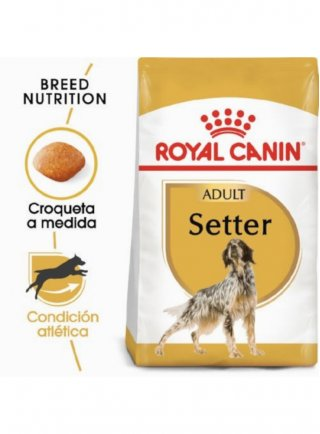 Setter Adult Royal Canin