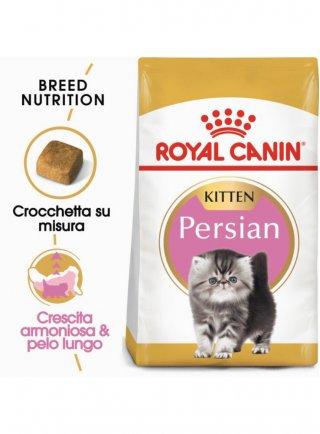 Kitten Persian Royal canin