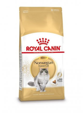 Norvegese delle foreste NORWEGIAN FOREST CAT Royal canin