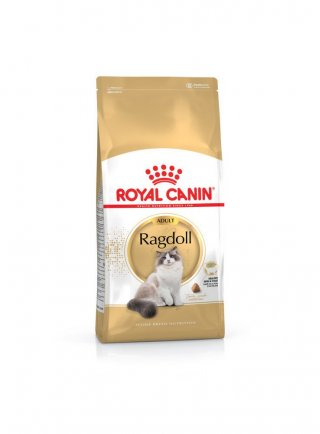 RAGDOLL Royal Canin