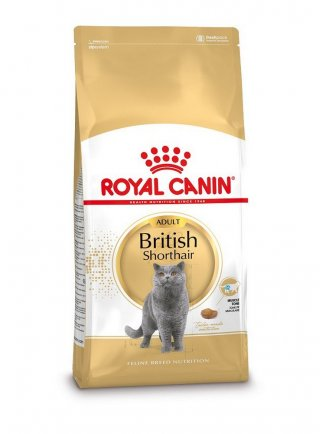 British Shorthair Royal Canin