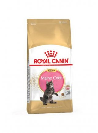 Maine Coon Kitten Royal Canin