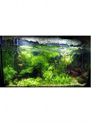 Allestimento completo amazonia per acquari