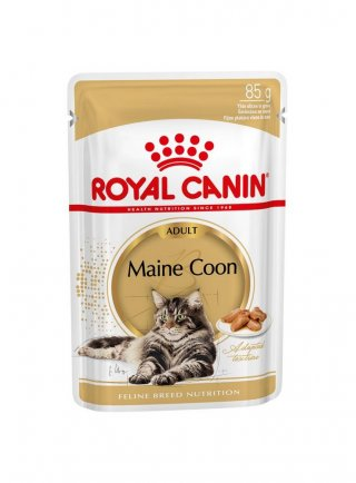 Maine Coon buste Royal Canin