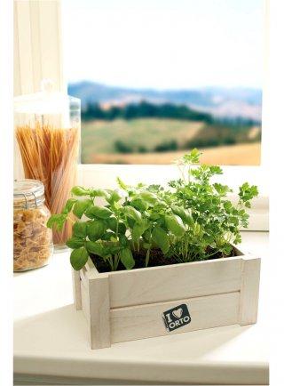 Cassettine pronte con terriccio e semi per Erba Cipollina, Peperoncino, Menta, Basilico