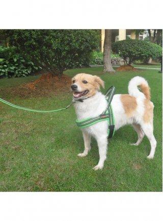 GUINZAGLIO per cani IMBOTTITO riflettente OUTDOOR LEISURE 2x120 cm Pettribe