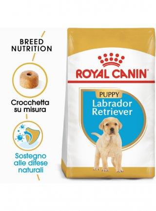 Labrador Retriever Junior Royal Canin