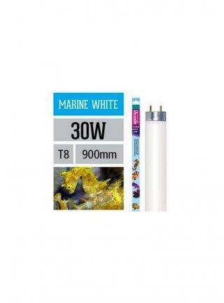 Arcadia Neon Fresh Water T8 36W luce per acquario marino