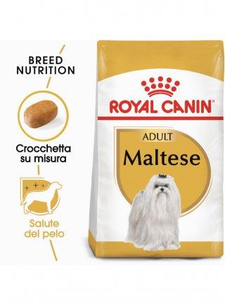 Maltese Adult Royal Canin