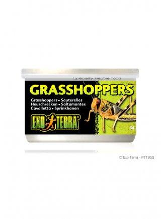 exoterra grasshoppers 34gr cavallette PT 1950
