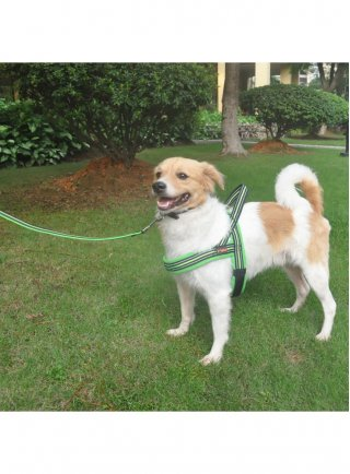 PETTORINA per cani regolabile OUTDOOR LEISURE arancione o verde Pettribe