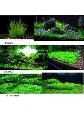 Assortimento 3 piante prato zen
