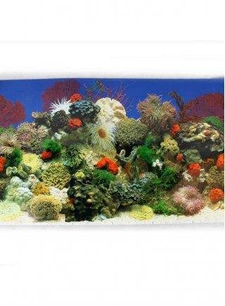 Sfondo per acquario Coralli SF11