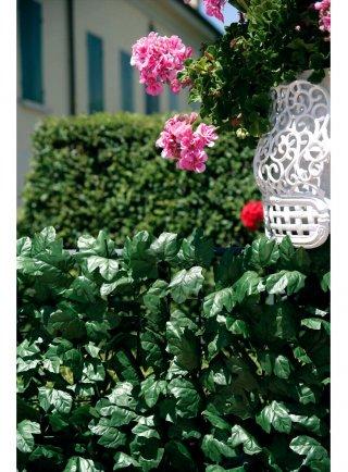 Siepe Verdecor a foglie tipo edera lauro o photinia