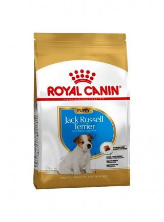 Jack Russell puppy Royal Canin